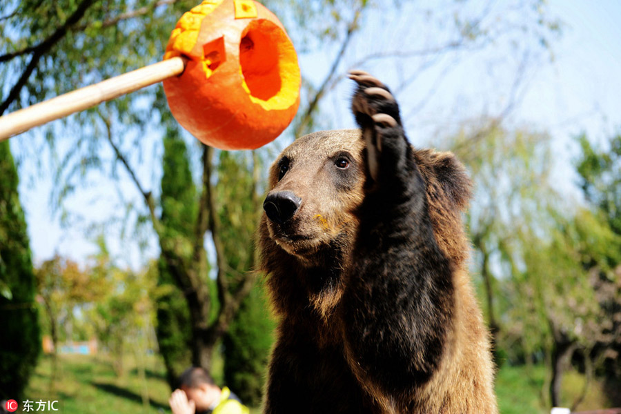 Halloween treats for animals at the zoo